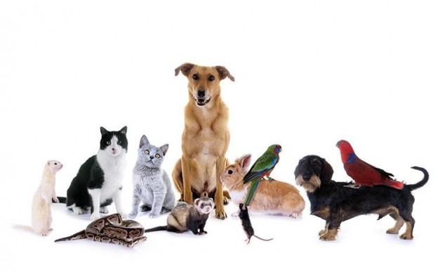 L'assurance pour animaux domestique